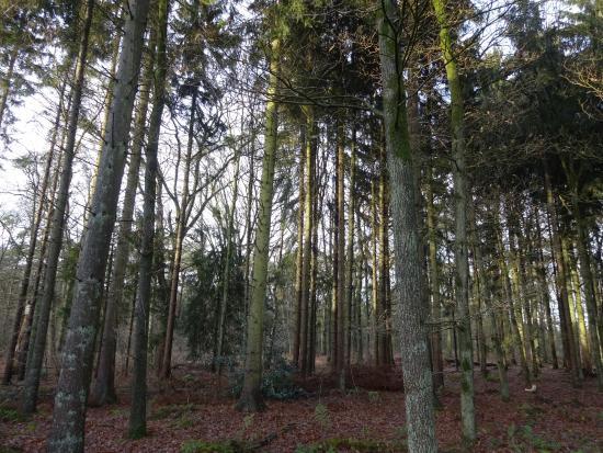 Van der Valk Hotel Arnhem: Bosrijke omgeving