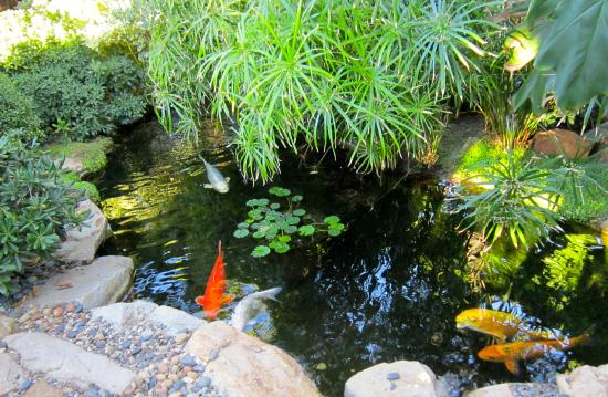 Koi Fish In Pond Picture Of Self Realization Fellowship Hermitage Meditation Gardens