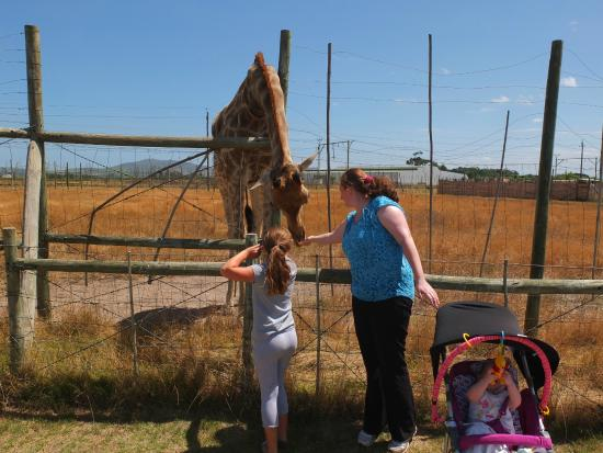 Giraffe House Wildlife Awareness Centre: Jerry the giraffe