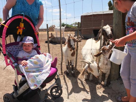 Giraffe House Wildlife Awareness Centre: Feeding animals