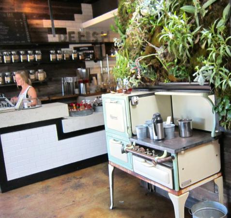 Cafe Topes: succulents growing on the wall
