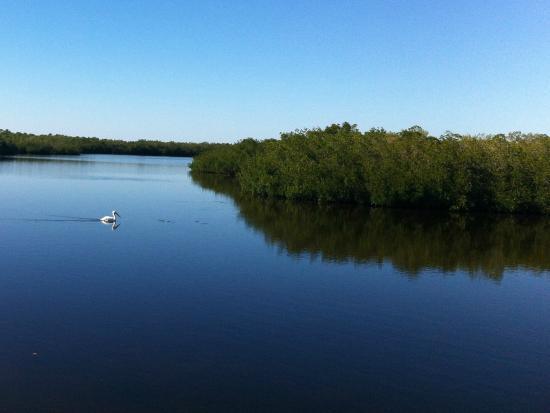 Cape Haze Pioneer Trail Park: Pelican on Coral Creek