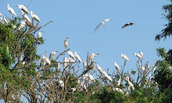 Tỉnh Hải Dương, Việt Nam: Bird Island In Thanh Mien Hai Duong