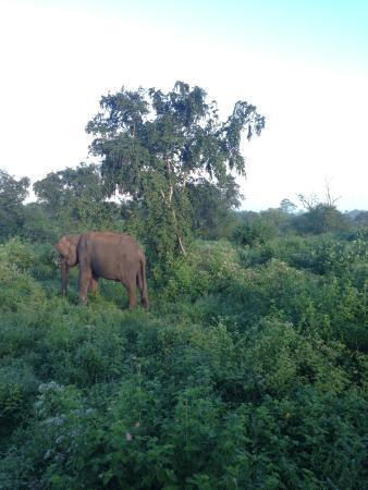 Pavana Resort: Safari at Udawalawe
