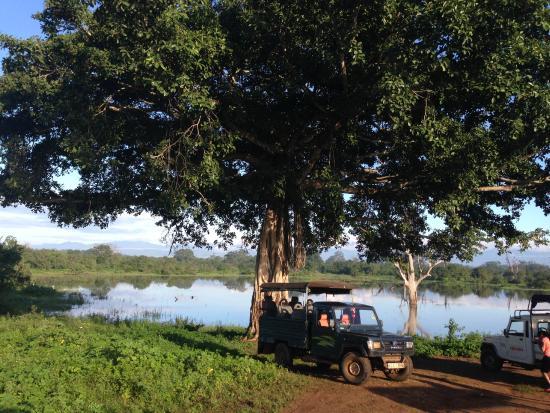 Pavana Resort : Safari at Udawalawe