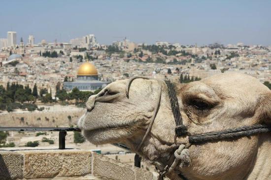 Ahishalom - Jerusalem Guide