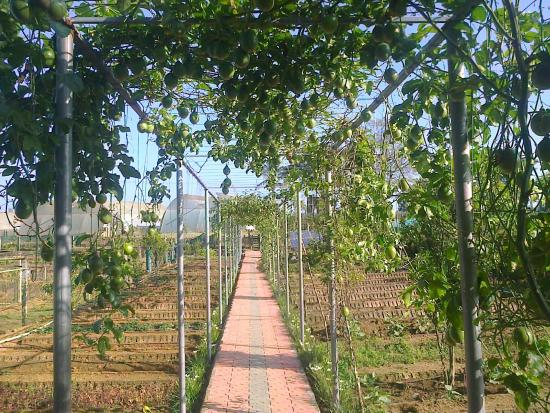 Nelliyampathy, Indien: Government Fruits & Veg. Farm