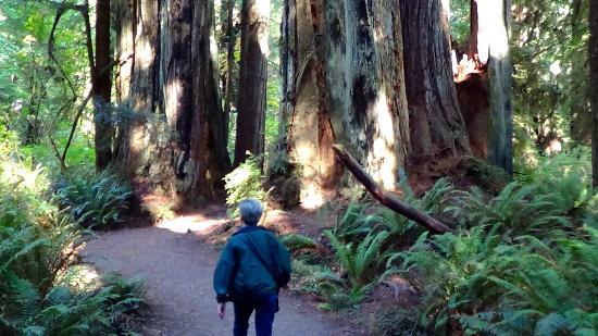 Redwood Highway: Redwood grove at Prairie Creek State Park