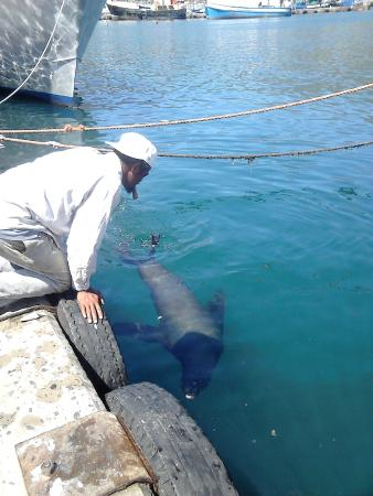 Drumbeat Charters : Man feeding seal with fish in his mouth