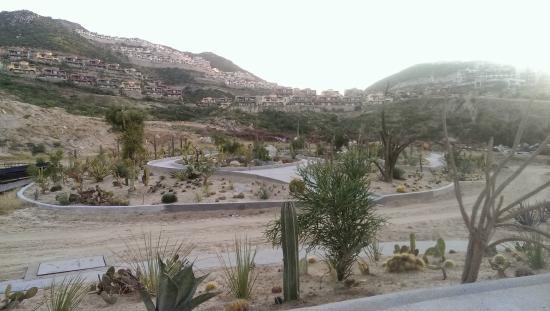 Montecristo Estates Pueblo Bonito : Cactus Garden