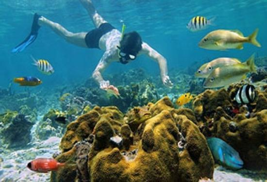 Culebrita Island : Mergulho
