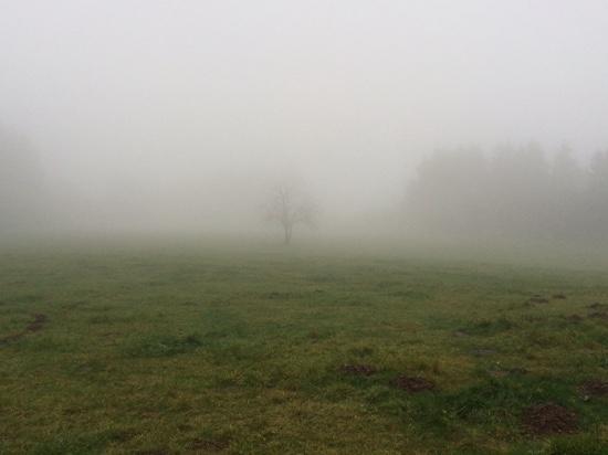 Domaine des Hautes Fagnes: Hoge Venen in de mist