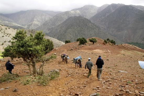 Berber Walk