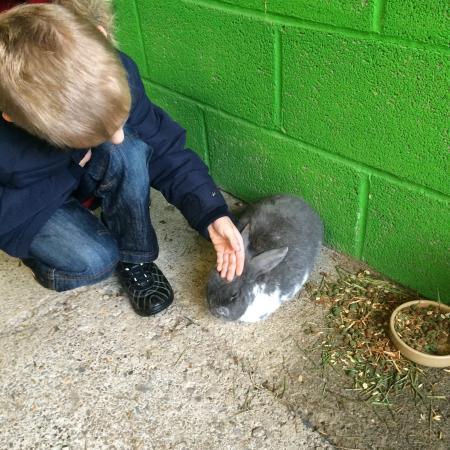 Prickly Ball Farm: Very friendly rabbits
