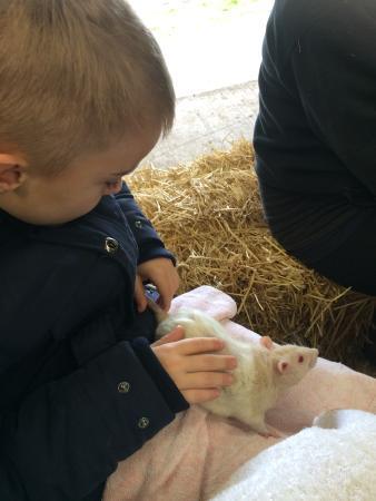 Prickly Ball Farm: Very friendly rat.