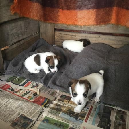 Ludlow Farmstay: New puppies
