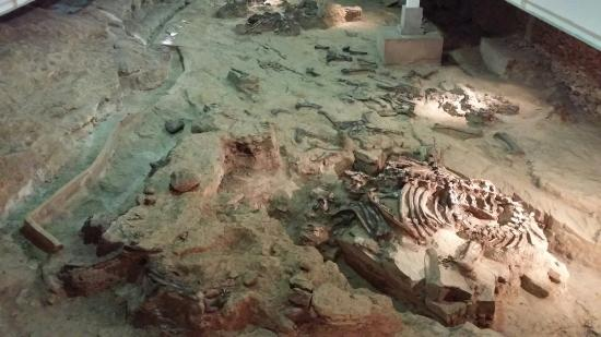 Sirindhorn Museum and Phu Kum Khao Dinosaur Excavation Site: Excavation site