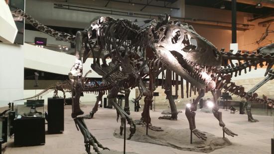Sirindhorn Museum and Phu Kum Khao Dinosaur Excavation Site: Museum