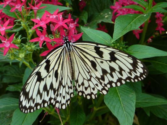 Jardin des Papillons - Hunawihr, Francia