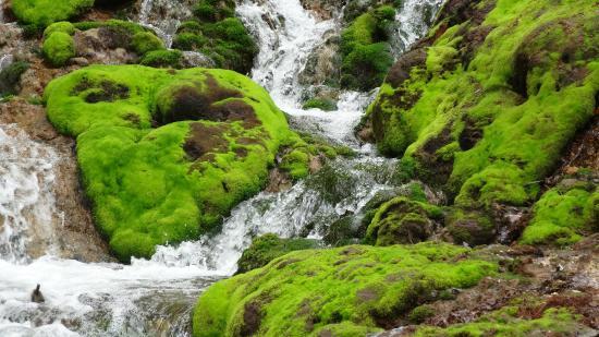 Nakanojo-machi, ญี่ปุ่น: 渓流とチャツボミゴケ