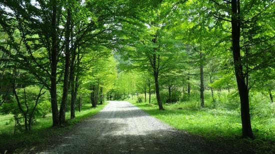 Nakanojo-machi, Japan: 駐車場までの林道