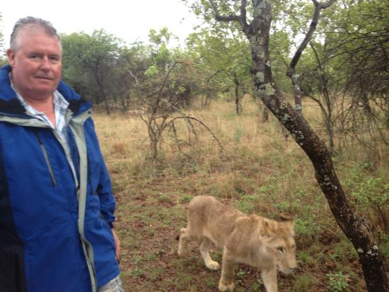 Walk With Lions: How close