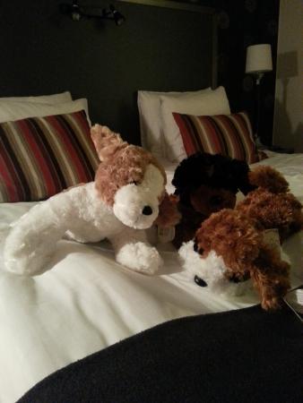 Best Western Plus Hotel Noble House: веселые собачки