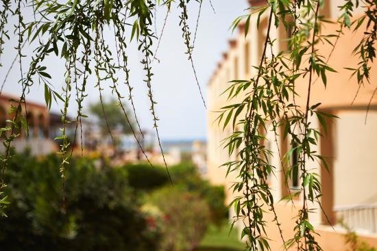 Universal Hotel Don Leon: Garden