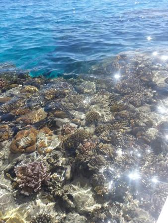 Hilton Sharm El Sheikh Fayrouz Resort : Кораллы