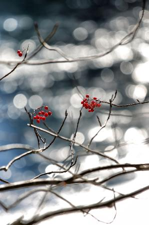 Lake Onneto: Nanakamado Tree with cherries by the lake