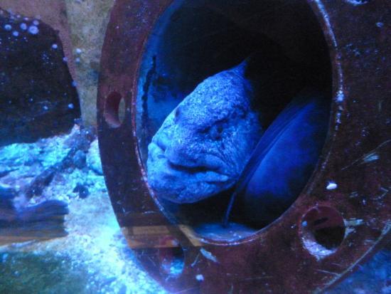 aquarium st malo picture of grand aquarium malo tripadvisor