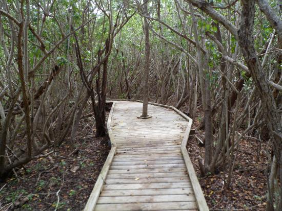 Francis Bay Trail : Boardwalk