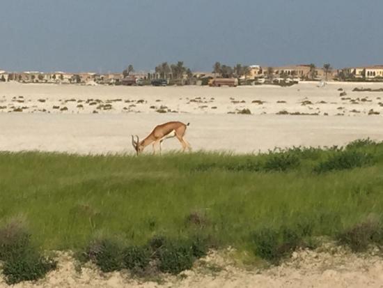 Saadiyat Beach Golf Club: Great Day