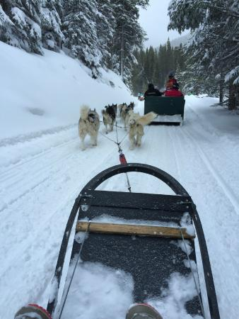 Good Times Adventures: View as passenger from dogsled