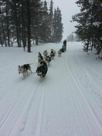 Good Times Adventures: View from back of pulled sled