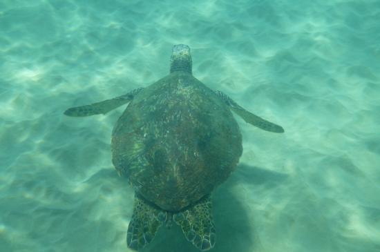 Wailea Elua Village Snorkeling At Ulua Beach