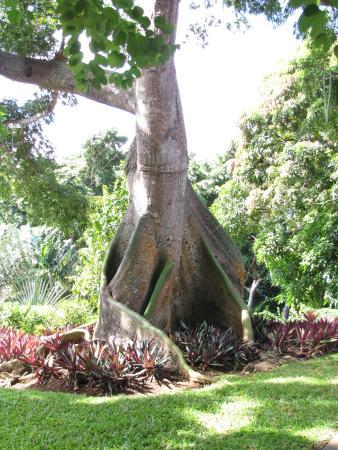 Une des belles vari t s de fleurs exotiques photo de - Jardin botanique guadeloupe basse terre ...