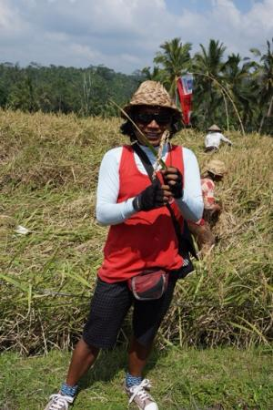 Bali Breeze Tours: Ketut showing us a sheaf of paddy