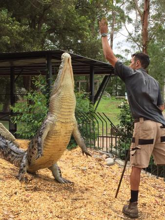 Shoalhaven Zoo : Crocodile show