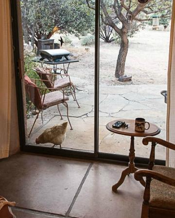 Cochise Stronghold, A Nature Retreat: Resident Cute Chicken
