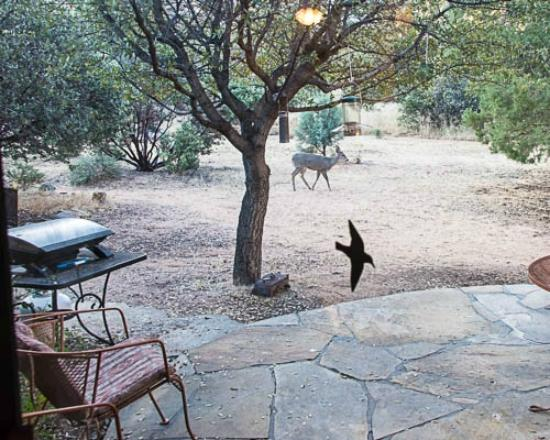 Pearce, AZ: Visiting Deer