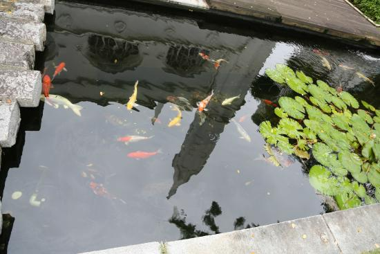 St.-Andrews-Kathedrale: Koi pond behind the cathedral