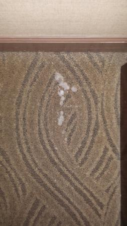Crowne Plaza Dayton: Stained carpet