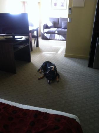 Comfort Inn & Suites City Views: Dog tired!