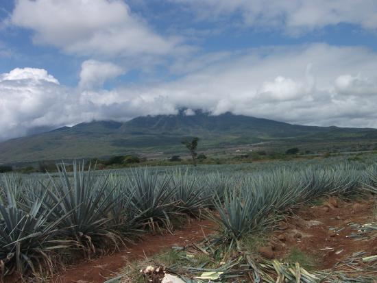 Tequila Tours: Volcan de Tequila