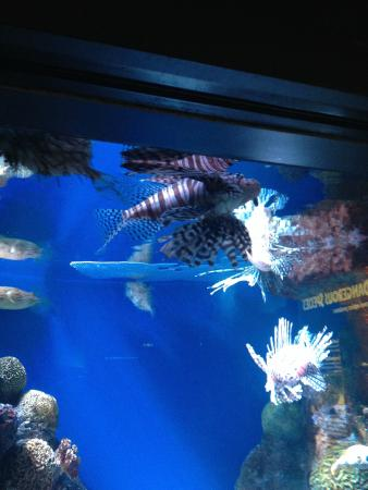 Aqu Rio De Boston Picture Of New England Aquarium Boston Tripadvisor
