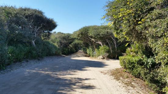 North Beach Camp Resort : Driveway leading to the sites.