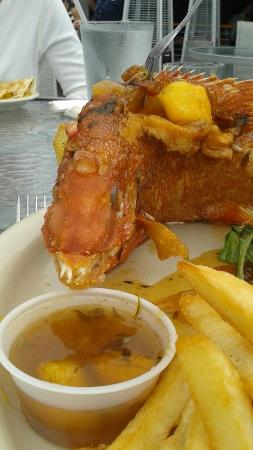 Ozona Blue: hog fish