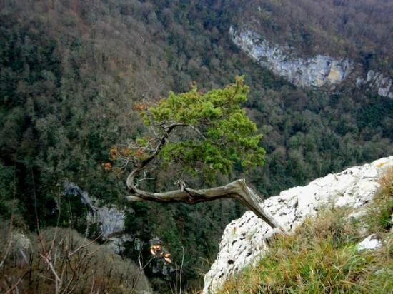 Agura Waterfalls: сосна на склоне белых скал