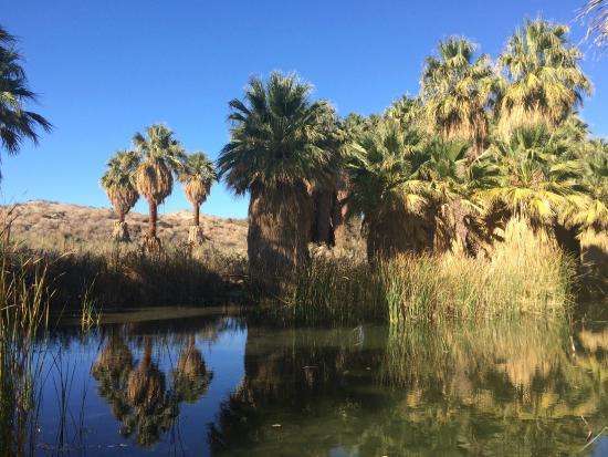 Mccallum Trail Picture Of Coachella Valley Preserve